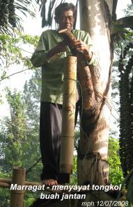 Pandapotan Hutauruk - Parragat