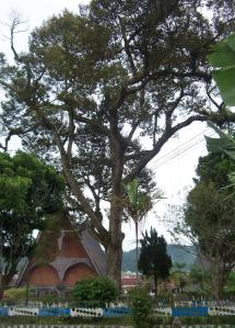 Tarutung - Pohon Durian